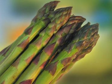 Continua la festa con l'asparago verde di Montalto di Castro