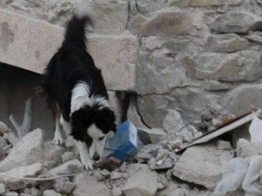 Terremoto. La LAV Roma attiva tre punti raccolta per i materiali utili agli animali colpiti