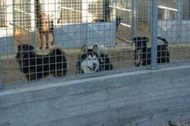 LAV Roma a tutela degli animali del canile della Muratella. Donati € 6.685 per spese veterinarie
