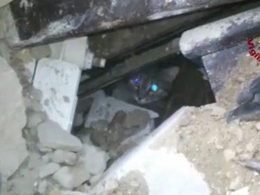 Terremoto: i Vigili del Fuoco salvano un gattino