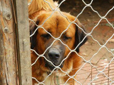 Canili comunali di Roma: Il gestore percepisce 121.472 euro all'anno, ma le spese veterinarie le pagano i volontari