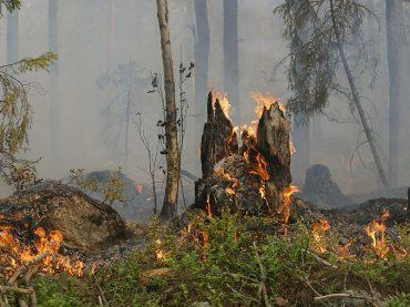 Mentana. Ordinanza per prevenzione incendi e pulizia fondi incolti