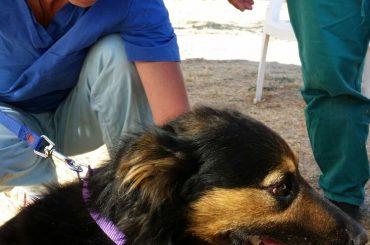Mentana. Bilancio campagna microchip: quasi 100 cani microchippati