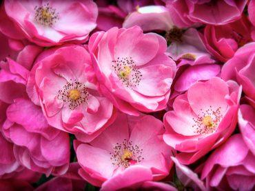 Scegliere i fiori giusti per un matrimonio: 5 consigli