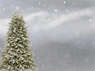 Raccolta abeti naturali di Natale. Gratuitamente nei centri Ama