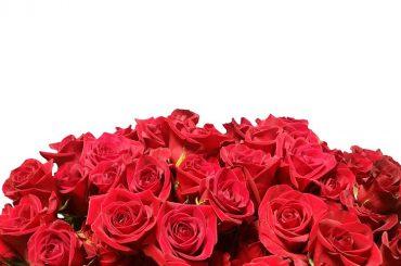 San Valentino: manuale anti-gaffe sul linguaggio dei fiori