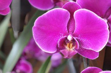 """Monte Porzio Catone. """"Orchidee dal Mondo"""", 23a edizione dal 13 al 15 aprile"""