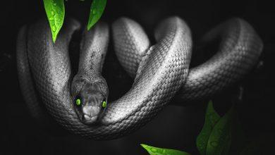 Il serpente: simbolo ancestrale, protagonista di miti e culti, emblema di rinascita