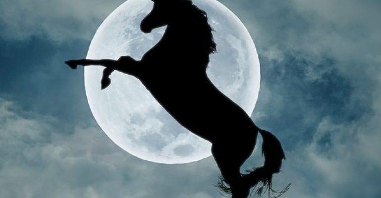 Unicorno: storia di una creatura leggendaria